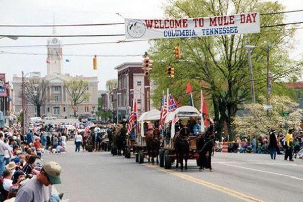 Mule Day parade